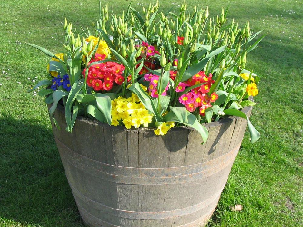 Jak wybrać donice ogrodowe