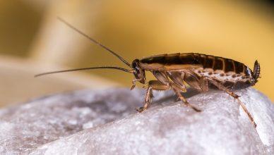 porzadki z robakami