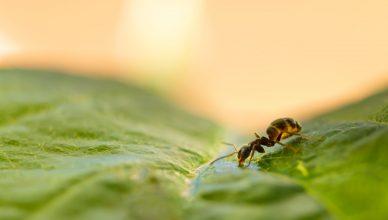 usuwanie mrowek